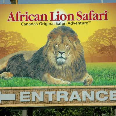 BOXED_African-Lion-Safari-Sign-600